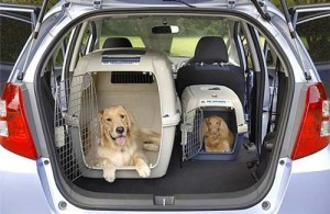 9278Traveling with your pet by car